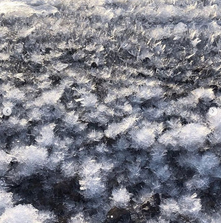 """На берегу Финского залива распустились """"ледяные цветы"""". Фото Скриншот Instagram: @max90_k"""