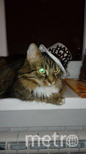 """""""Каждой нужна модная шляпка"""" - считает Муся. Хозяйка Марина. Фото """"Metro"""""""