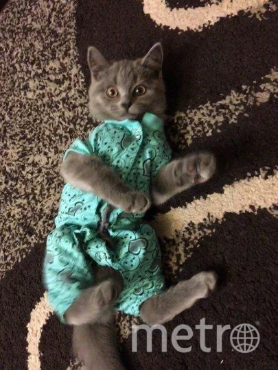 """Модницу зовут Туся,ей 4 месяца! Наталья. Фото """"Metro"""""""