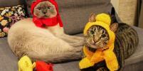 Самые модные: топ-20 фото нарядных котов Петербурга