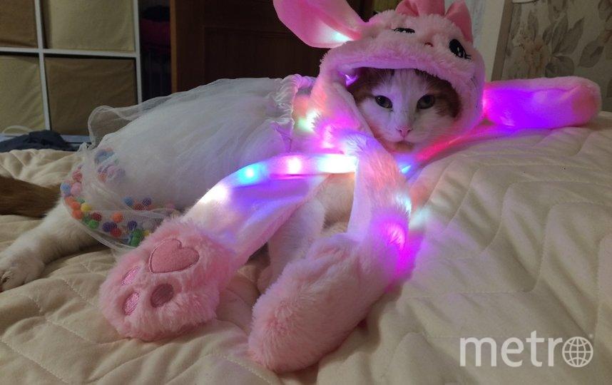 """модный кот Рыжик. Фото Наталия, """"Metro"""""""