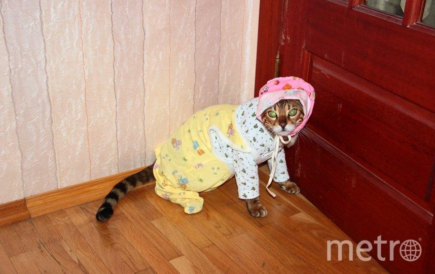 """Это наш кот, его имя Ник. Фото Марина., """"Metro"""""""