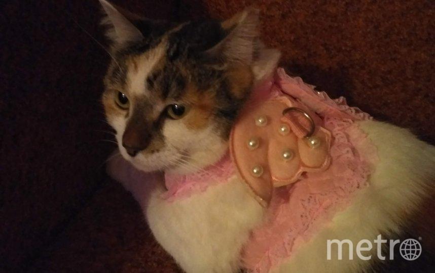 """Это Майя, в прошлом Эрмитажная кошка, в костюме Рождественского ангела. Но ангел получился грустным, впрочем, как и всегда. Ну не любит Майя наряжаться! Майе сейчас 6 лет. Фото Наталия Зеленкова, """"Metro"""""""