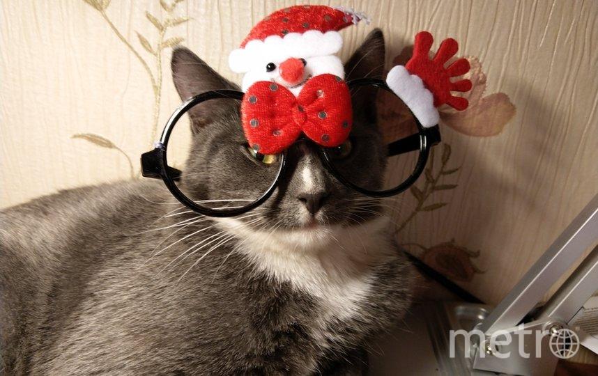 """Нашего котенка зовут Ричард, ему 5 месяцев. Он обожает что-то примерять, ему нравится, когда его тискают. САНТА КОТУС. Фото """"Metro"""""""