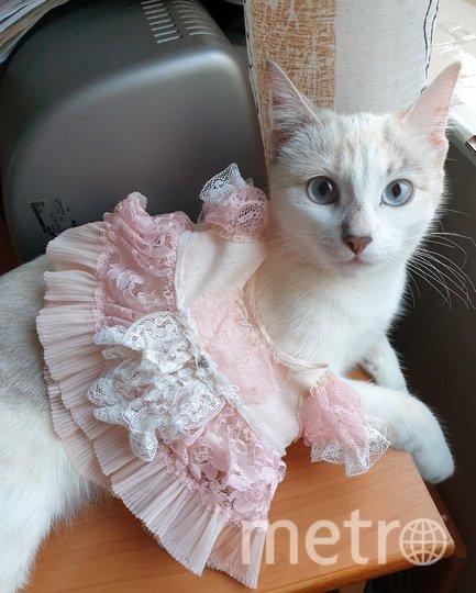 "Здравствуйте.Это наша кошка Ася, прынцесса и балерина, кусака и царапка. Я - ее хозяйка Светлана. Фото ""Metro"""