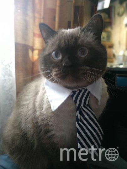 """Кот по имени Маку Македонский очень любит быть красивым! Фото Наталья Дворцова, """"Metro"""""""