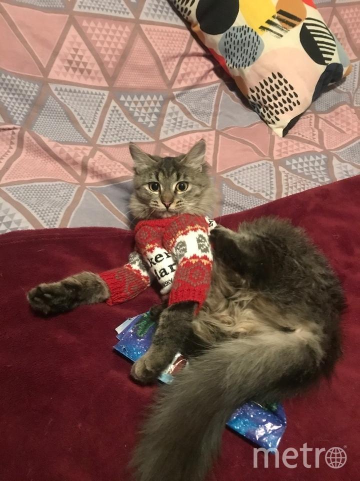 "Верона - обладательница модного свитера. Фото Юлия Андреенко, ""Metro"""