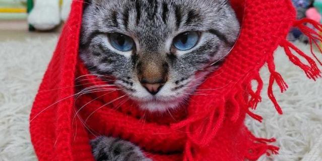 Обаятельный и привлекательный кот Марс.
