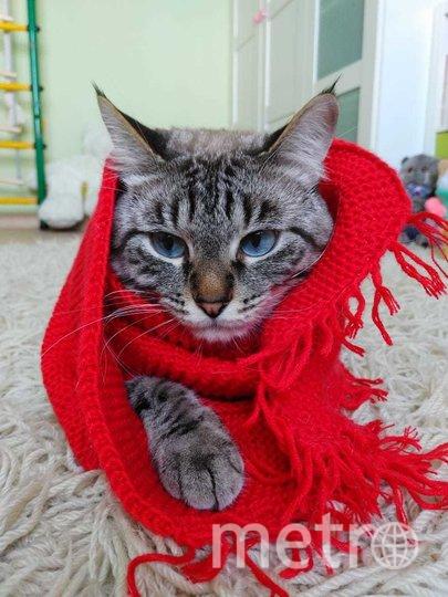 """Обаятельный и привлекательный кот Марс. Фото Левашова Евгения, """"Metro"""""""