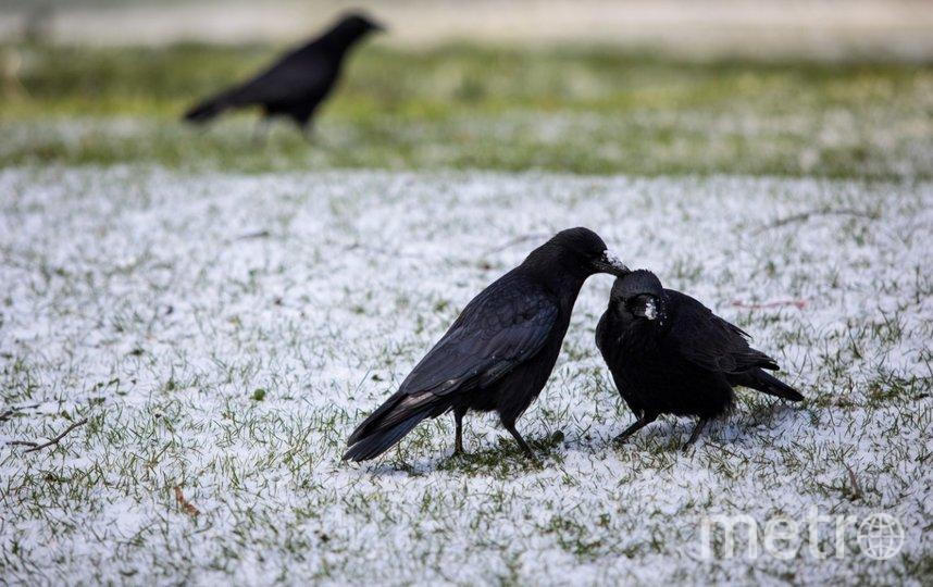 В Ленобласть придут метель и гололёд. Фото Getty