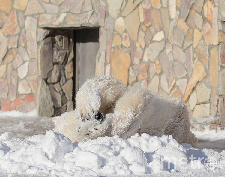 Хаарчаана радуется снегу. Фото Ленинградский зоопарк / instagram.com/spbzoopark