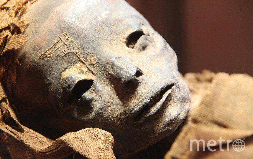 В московской квартире нашли мумию пятилетней давности. Фото Pixabay.com