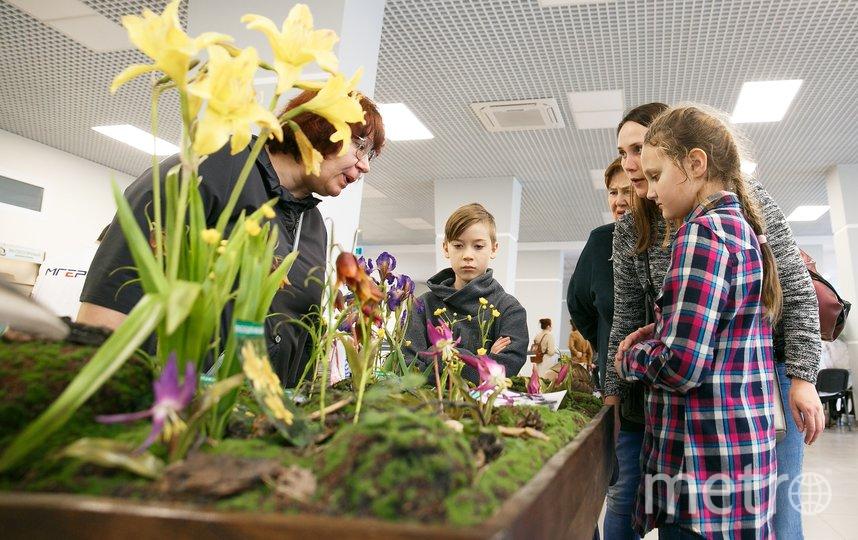 """Форум """"Экологичный Новосибирск"""" состоялся 8 февраля. Фото Егор Кудымов"""