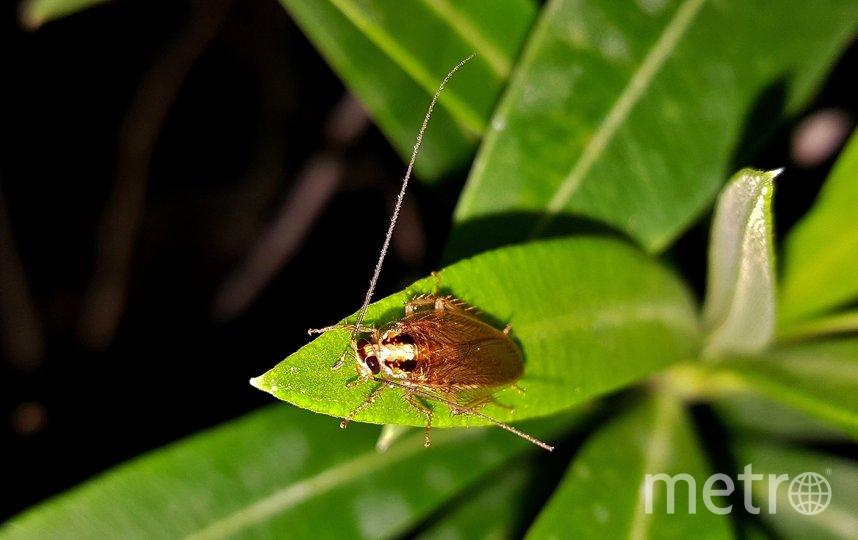 В двух зоопарках Техаса посетителям предлагают назвать именем бывшего партнёра таракана или крысу. Фото pixabay.com