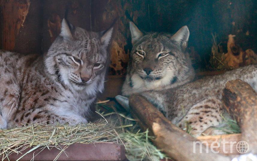 Гайка (слева)  и Чип (справа). Фото Василий Кузьмичёнок