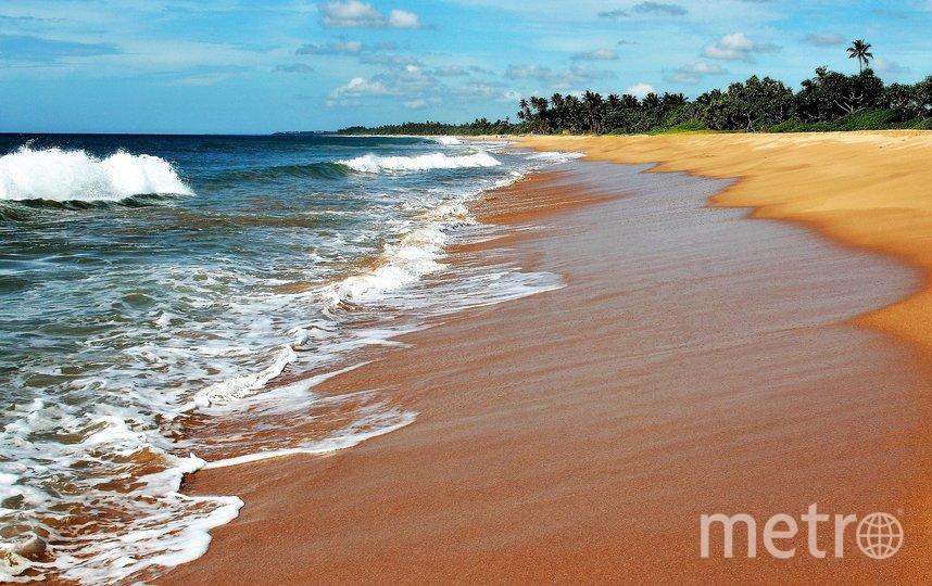 Шри-Ланка. Фото Pixabay