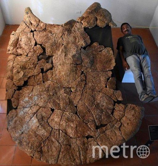 """Вот так выглядит окаменелый панцирь гигантской черепахи. Фото https://www.bbc.com/news/world-latin-america-51485011, """"Metro"""""""