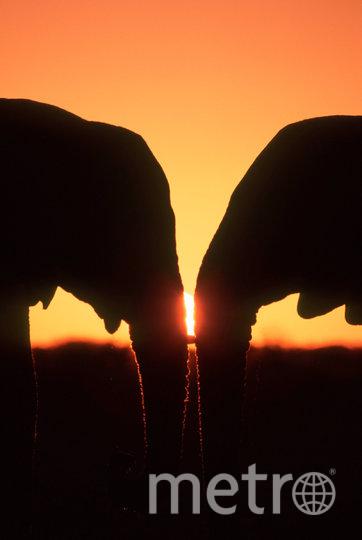 """В преддверии 14 февраля показываем самые очаровательные """"парочки"""", которые можно встретить в дикой природе. Слоны. Фото Мартин Харви / WWF"""