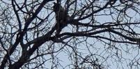 Смелого кота спасали с дерева у Эрмитажа – фото
