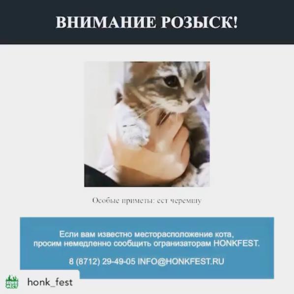Кота планируют пригласить на фестиваль в Грозном. Фото скриншот https://www.instagram.com/p/B8bYCI2HP5c/