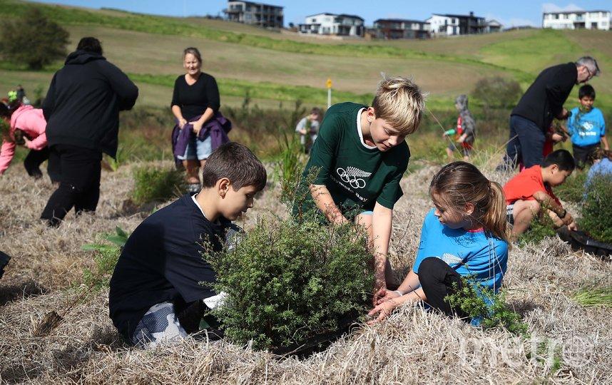 По мнению экспертов, когда речь заходит о посадке деревьев, необходим научно обоснованный подход. Фото Getty