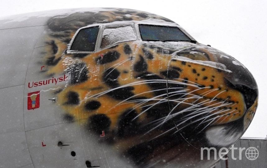 Дальневосточного леопарда по кличке Эльбрус доставили в Москву. Фото РИА Новости