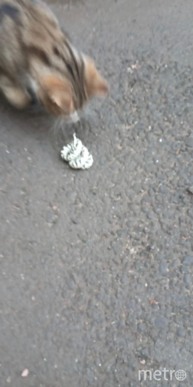 Петербургская кошка расправилась со змеёй в центре города. Фото Неизданное | ДТП и ЧП | Санкт-Петербург, vk.com