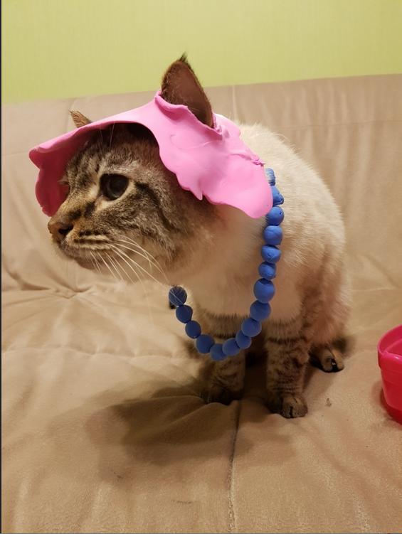 """Коты тоже бывают модными. Фото Ева, """"Metro"""""""