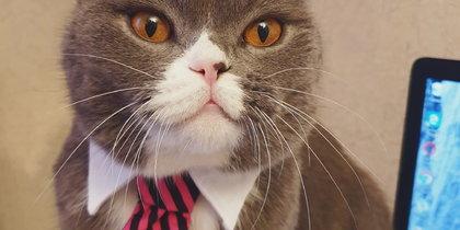 Самые модные кошки и собаки Москвы: Читатели Metro показали, как одевают своих питомцев