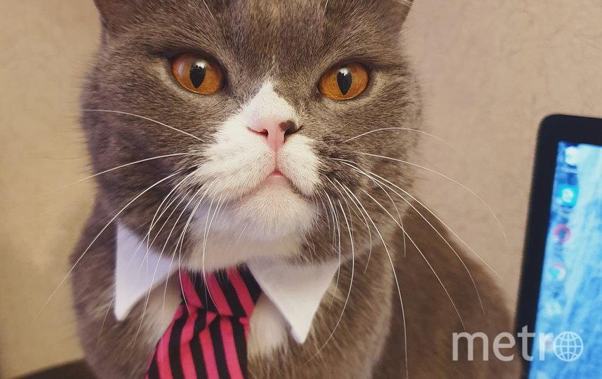 """Модник-бизнесмен мистер Грей. Три года назад будущие хозяева увидели этого парня в зоомагазине и не смогли без него уйти. Любовь с первого взгляда! Фото Наталья, """"Metro"""""""