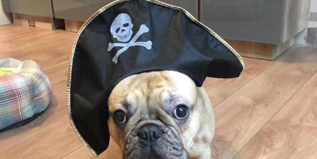 """Дексик – настоящий пират, все самое вкусное тащит себе на """"корабль""""."""