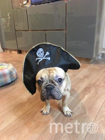 """Дексик – настоящий пират, все самое вкусное тащит себе на """"корабль"""". Фото Анна, """"Metro"""""""