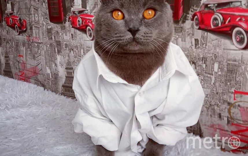 """Этот """"Ромео"""" по кличке Бакс так решил поздравить свою хозяйку с днём рождения. Фото Яна, """"Metro"""""""