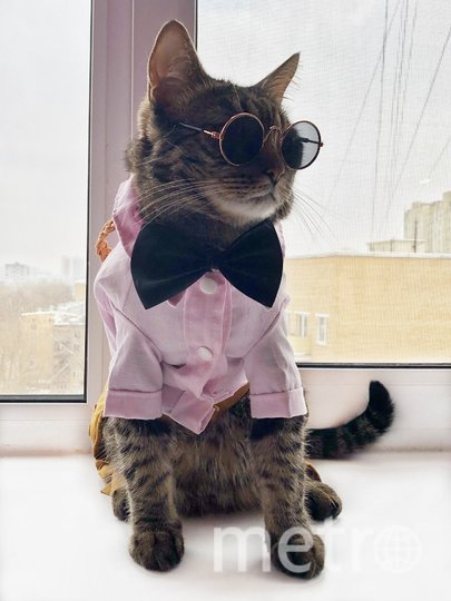 """Любовь к фотографии и примерке одежды у Рагнара – в крови! У хозяев также появилось желание отдать его в кошачье модное агенство. Фото Ксения, """"Metro"""""""