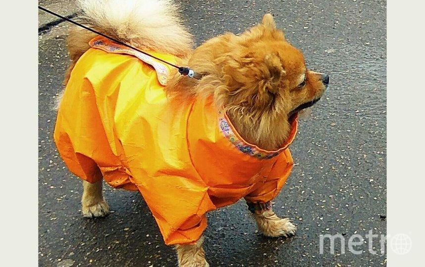 """Джессика на улице самая модная, всегда обращает на себя внимание """"лисенок"""" в ярко рыжей курточке. Фото Елена, """"Metro"""""""