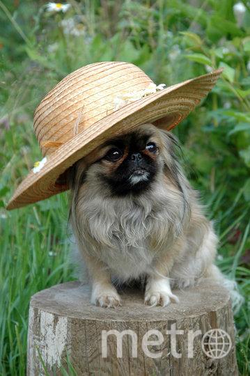 """Кия считает, что шляпы всегда смотрятся грациозно. Фото Светлана , """"Metro"""""""