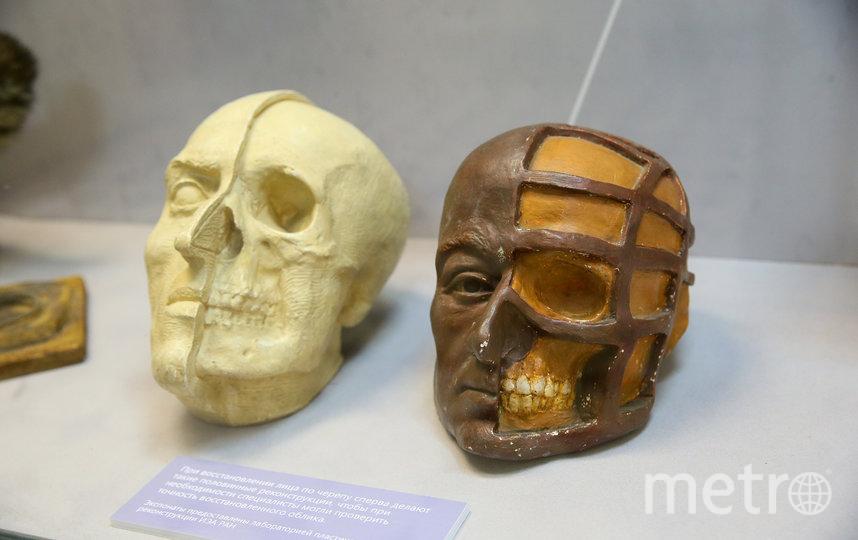 Белый череп – монголоида, коричневый– европеоида. Фото Василий Кузьмичёнок
