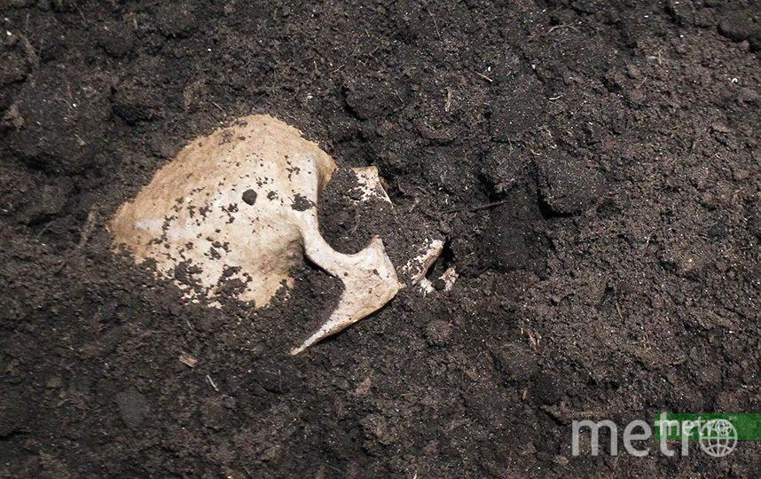 Учёные описали первый за последнее десятилетие сочлененный скелет неандертальца, обнаруженный в пещере Шанидар. Архивное фото. Фото Василий Кузьмичёнок