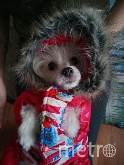 """Это наша красавица Джесси, китайская хохлатая собака, к зиме готова. Дмитрий. Фото """"Metro"""""""