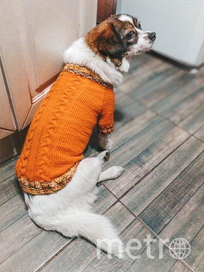 """Ради свитера для любимой собачки Белки пришлось оперативно научиться вязать! Фото Марина Павлюченко., """"Metro"""""""