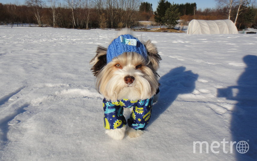 """Плюша пёс любит мороз! Хозяева Влад и Карина. Фото """"Metro"""""""