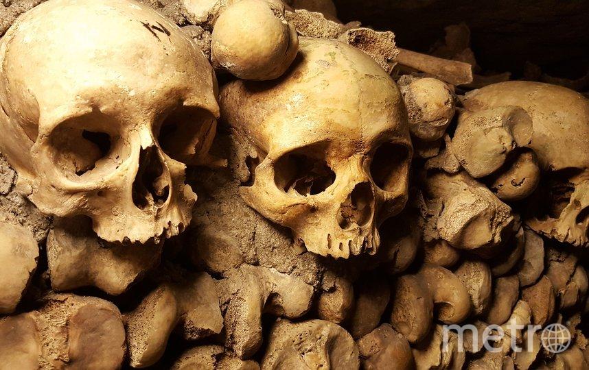 В Бельгии археологи обнаружили стены из человеческих костей. Фото Pixabay