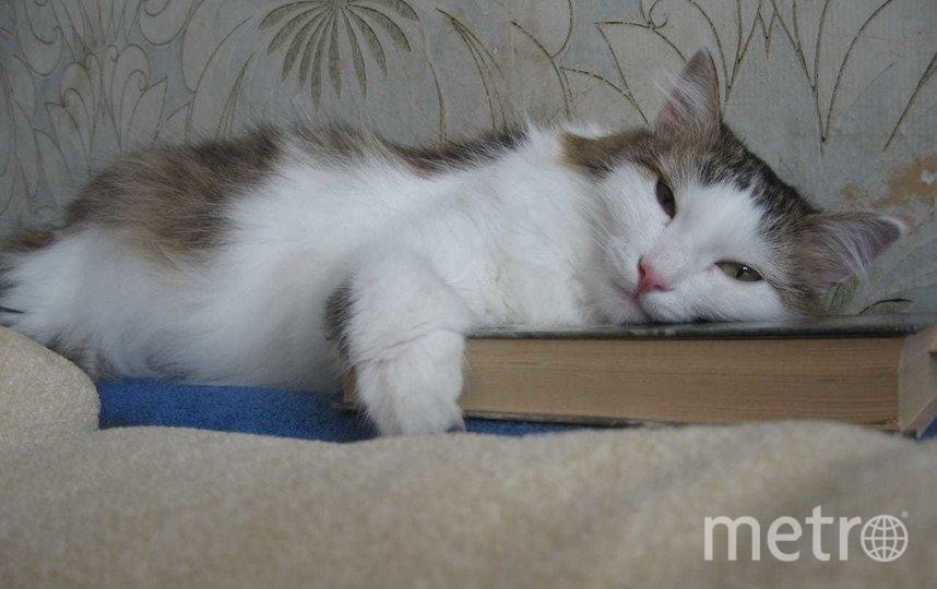 """Тот самый кот. Фото предоставила Евгения, """"Metro"""""""