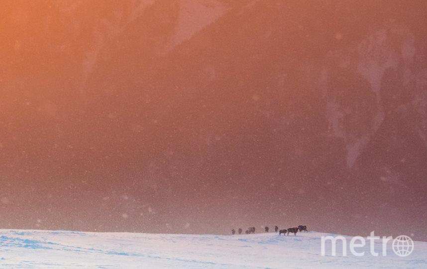 Зубры на хребте Джуга. Фото Дмитрий Андреев | WWF России