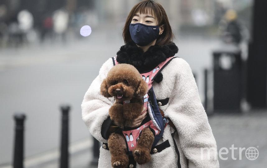 Собаководы надевают маски и на своих питомцев. Фото Getty