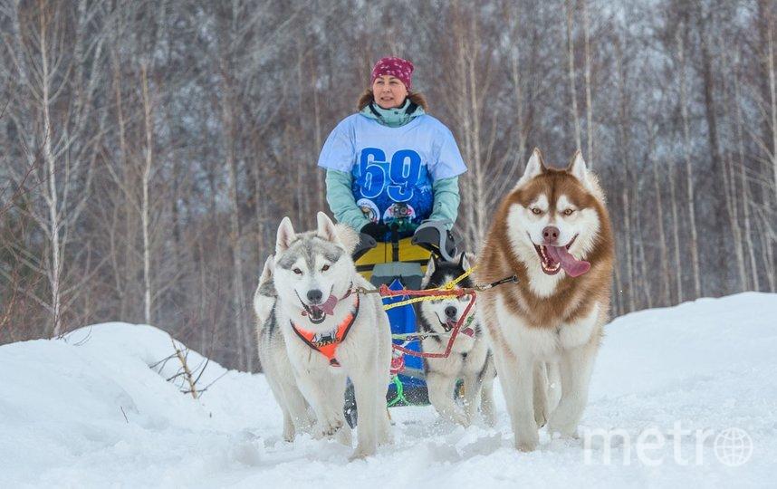 В программу были включены гонки на собачьих упряжках и лыжные заезды с собаками. Фото Ильнар Салахиев