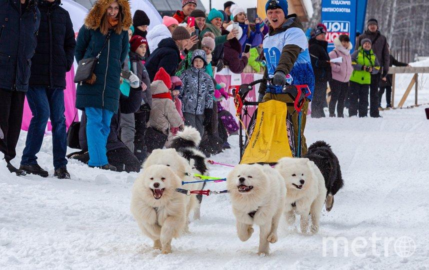 В упряжках – от двух до восьми собак. Фото Дмитрий Агеев, Предоставлено организаторами