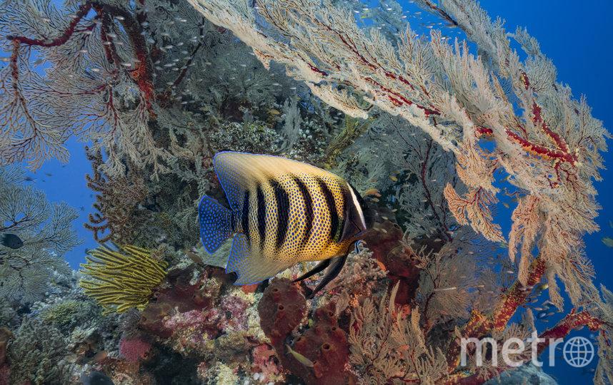 Коралловые рифы находятся под угрозой исчезновения. Фото Getty
