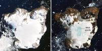 Антарктида тает из-за аномальной жары