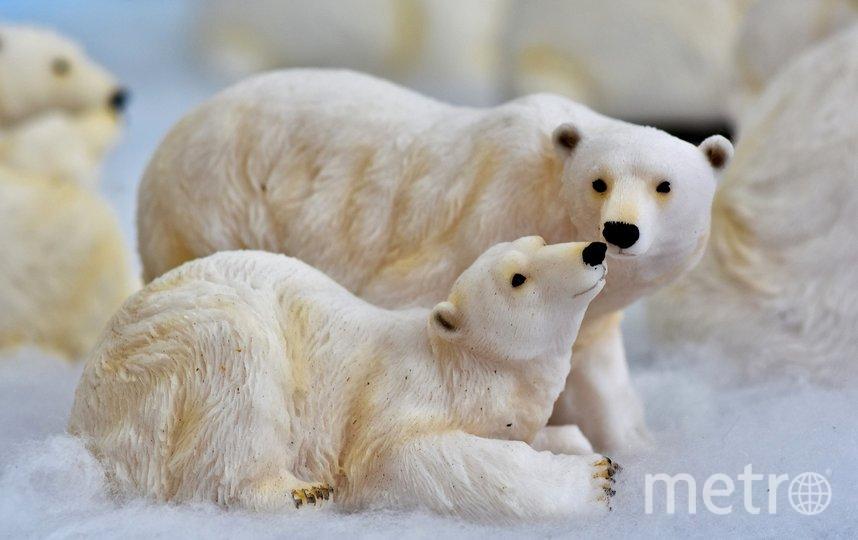 Исследователи посчитают белых медведей в Арктике к 2024 году. Фото Pixabay